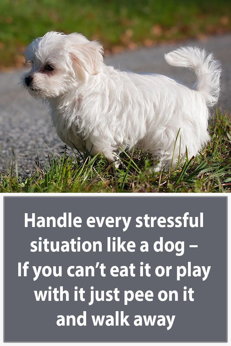 Our 17 Favorite Dog Quotes Heart Warming Quotes About Dogs Dog