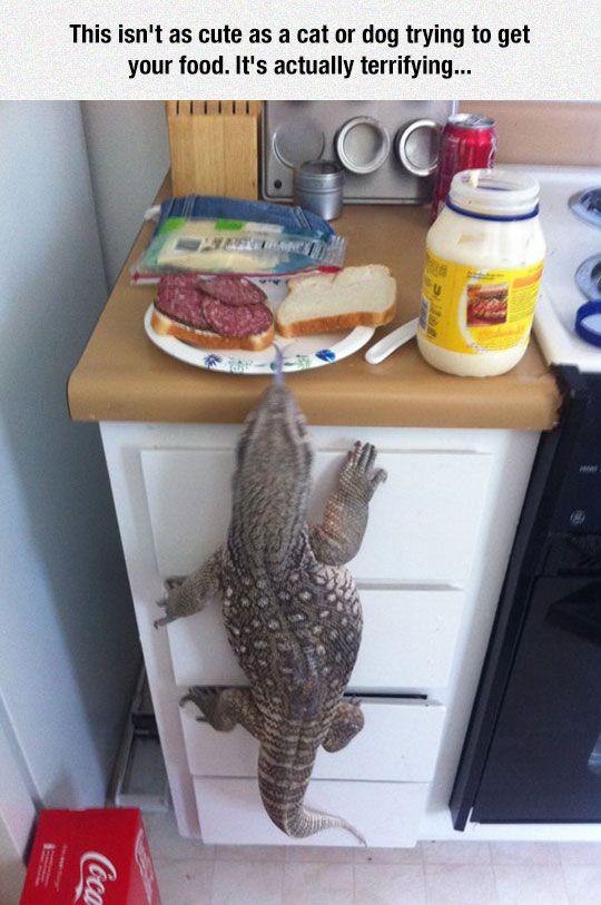 Common Pet In Australia
