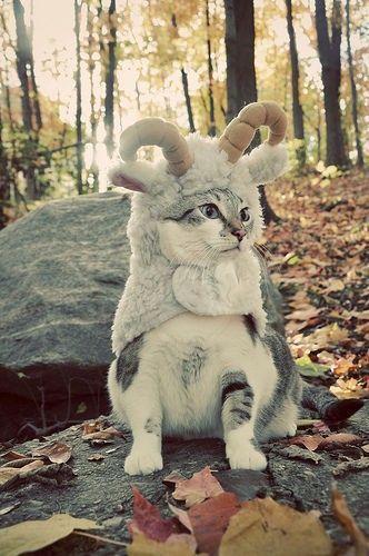 Cute cat in costume outside