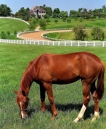 Lexington Kentucky horse farm..only in my dreams..I would love a horse farm..anything with white fence