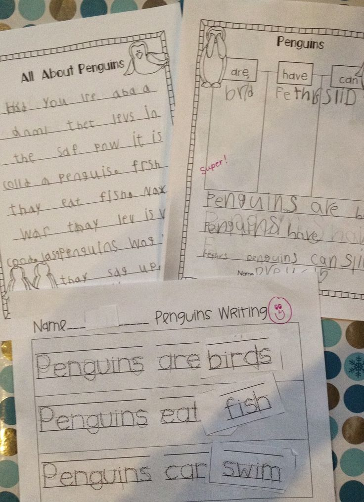 Compare and Contrast Polar Bears and Penguins - First Grade Roars!