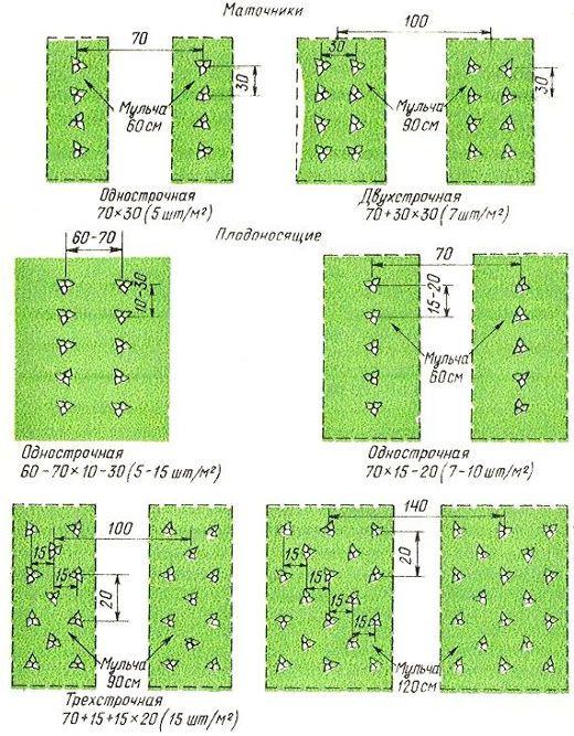 Схемы посадки земляники