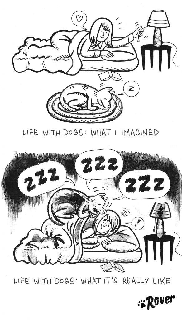 Life with your fuzzy friend