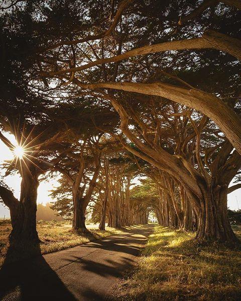 Túnel del árbol de Cypress, California