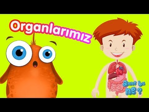 İç Organlarımız | Okul Öncesi Eğitici Animasyon | Anne Bu Ne? - YouTube