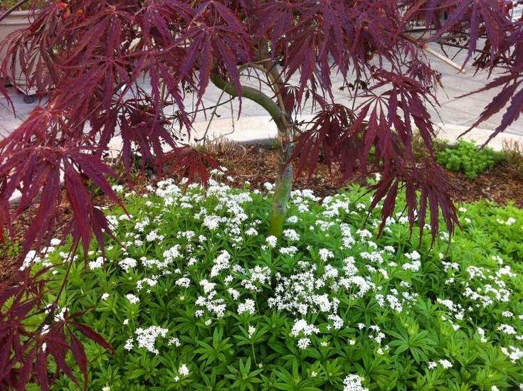Plantes d'ombre pour le jardin en 21 photos fascinantes!