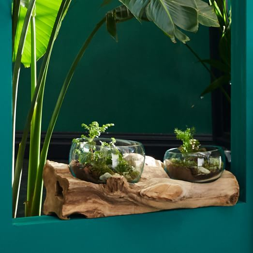 Wood + Glass Terrarium, Double