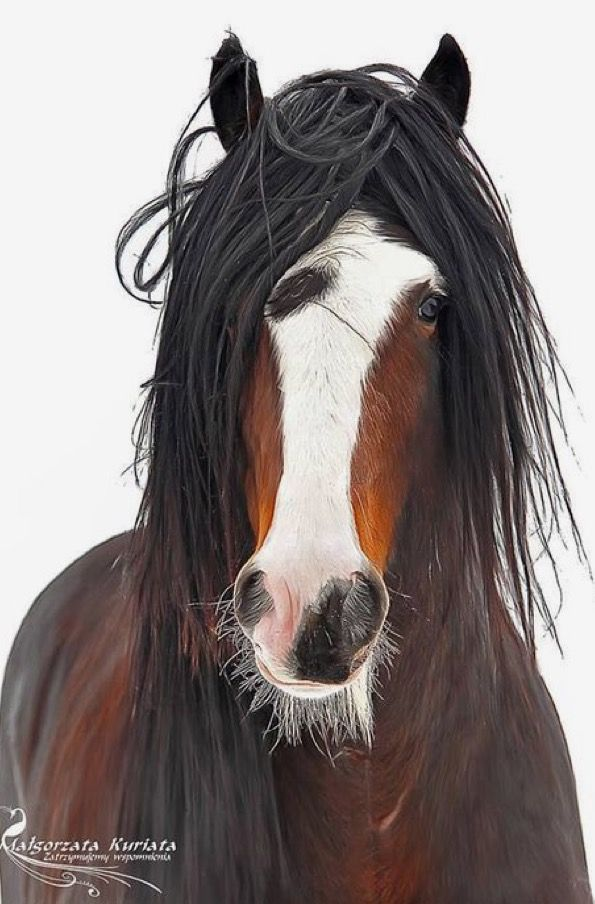 Norman Reedus has nothing on my mane do. lol