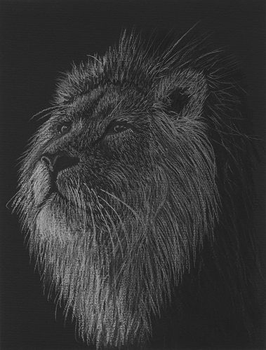 I hope you enjoy the little back story below I have created for my black and white pastel and charcoal drawing of a male lion name Xaviour.The king, Xaviour, surveys his surroundings. From his postion under the shade of the Acacia tree, he can see the whole pride.All is peaceful this morning....  Blog and artwork by Tracey Everington of Tracey Lee Art Designs