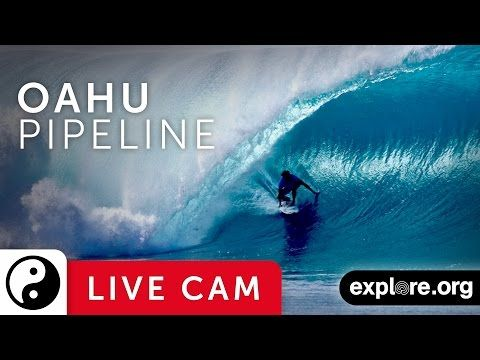 Turtle Bay Camera East - Live stream from the North Shore | Explore.org