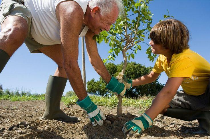 Посадка деревьев весной - правила посадки - схема, видео