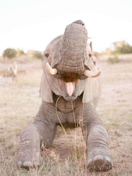 SAVE THE ELEPHANTS                                                                                                                                                      More