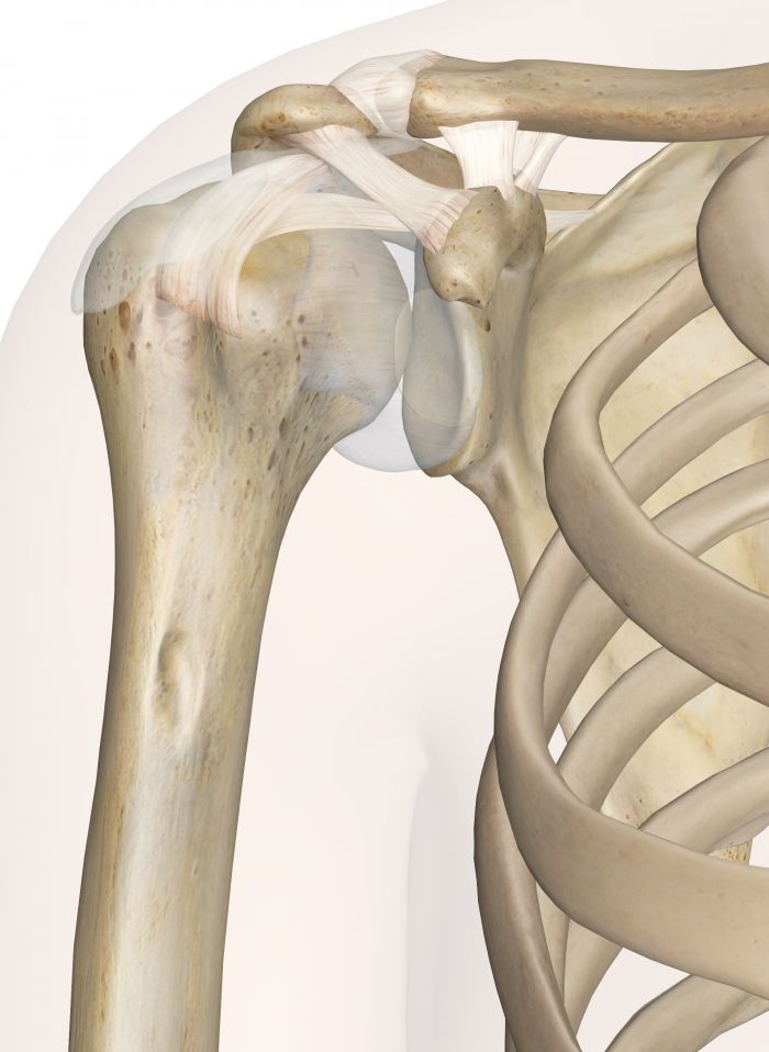 2D and 3D muscle, ligament, and skeleton visualization tool