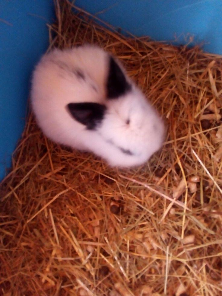 Coniglietto 1 mese di vita... (indifeso )😍😍😚