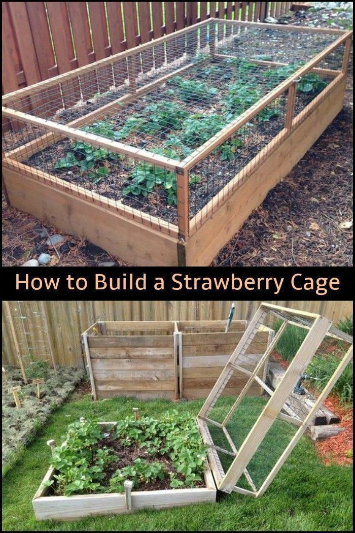 Preserve your strawberries away from critters by constructing a strawberry cage! #Raised…