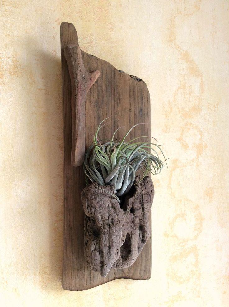 Pièce en bois flotté agrémentée d'un Tillandsia par l'Atelier de Corinne : Décorations murales par atelier-de-corinne
