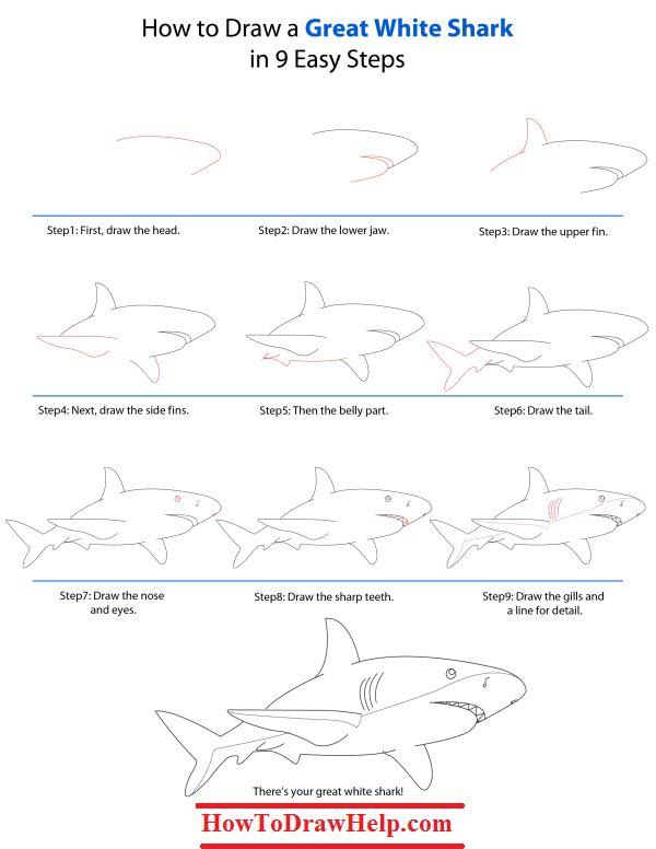 Best 25+ Shark drawing ideas on Pinterest | Shark, Shark ...  Best 25+ Shark ...