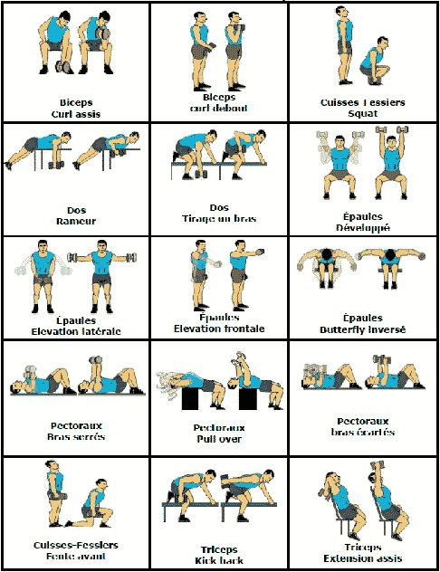 Téléchargez vite notre programme gratuit de 15 exercices avec haltères pour vous muscler facilement chez vous !