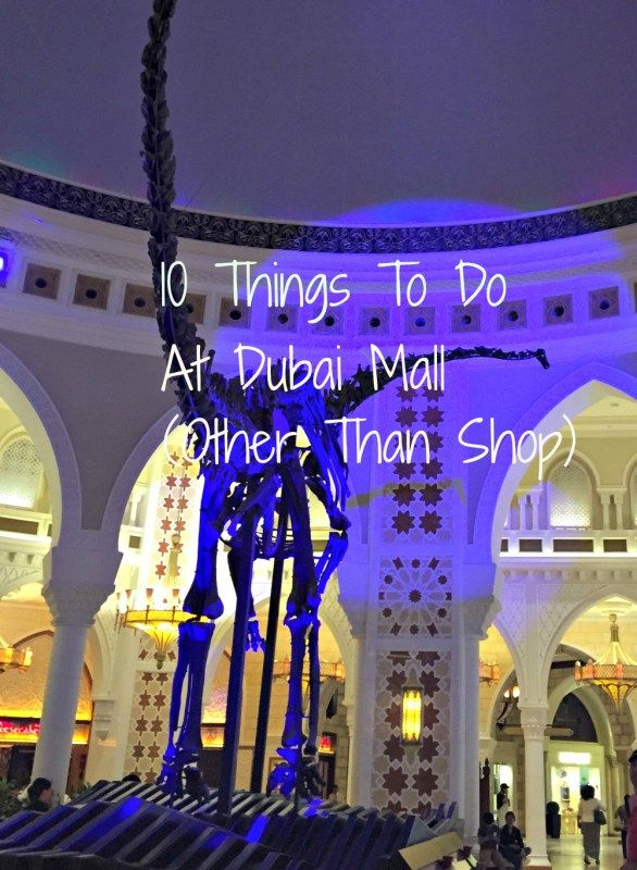 The real bones of a Diplodocus - just one of 10 things to see and do at Dubai Mall
