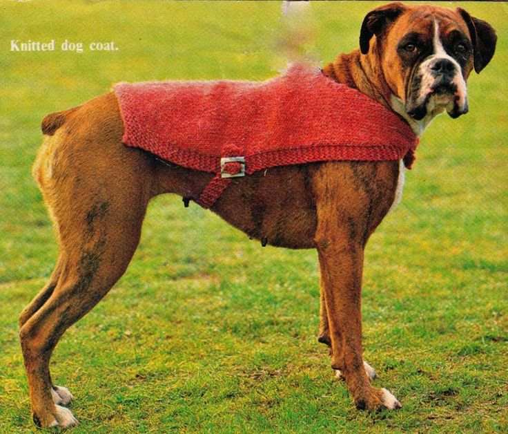 VINTAGE PET DOG COAT COVER JACKET WITH BUCKLE  MIXED SIZE 12PLY KNITTING PATTERN