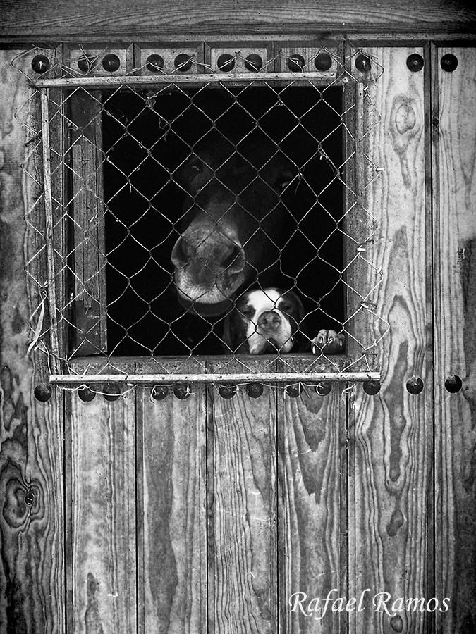 La mula y el perro Ohanes by Rafael Ramos Fenoy, via 500px Vive Alpujarra