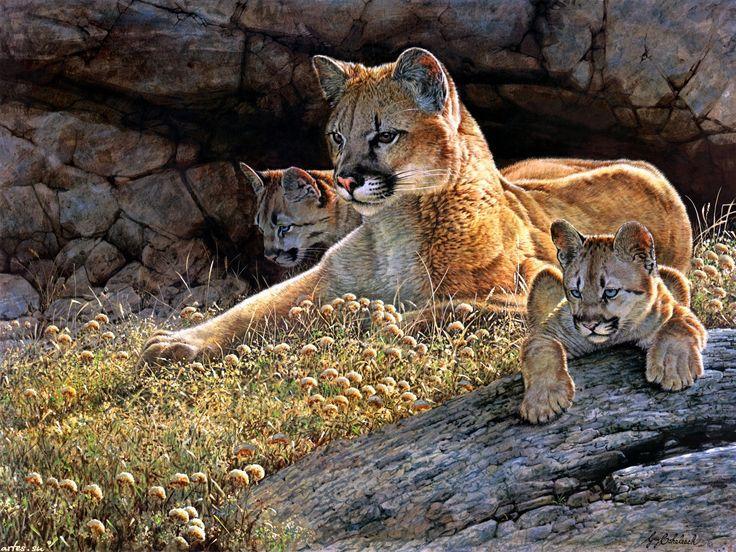 Скачать обои дикие животные, пума с детенышами, Guy Coheleach 1600x1200