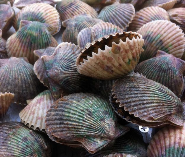 From the end of June through mid-September, Florida Scalloping Season is open