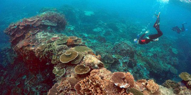 La Grande Barrière de corail australienne a connu un important épisode de blanchiment pendant l'année 2016. Pour autant, elle ne peut pas être considérée comme morte.