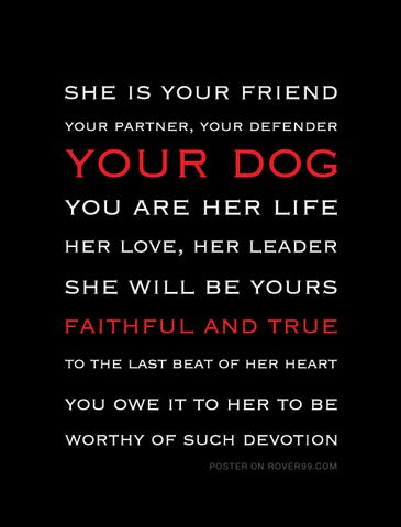 Rover 99 - *She Is Your Friend - dark | Poster