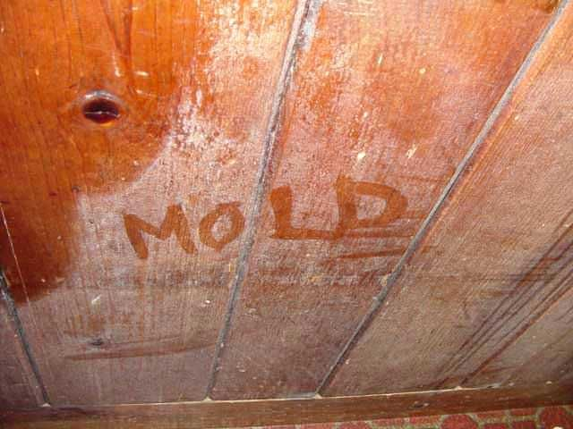 What Does Black Mold Look Like On Wood Google Search Mold