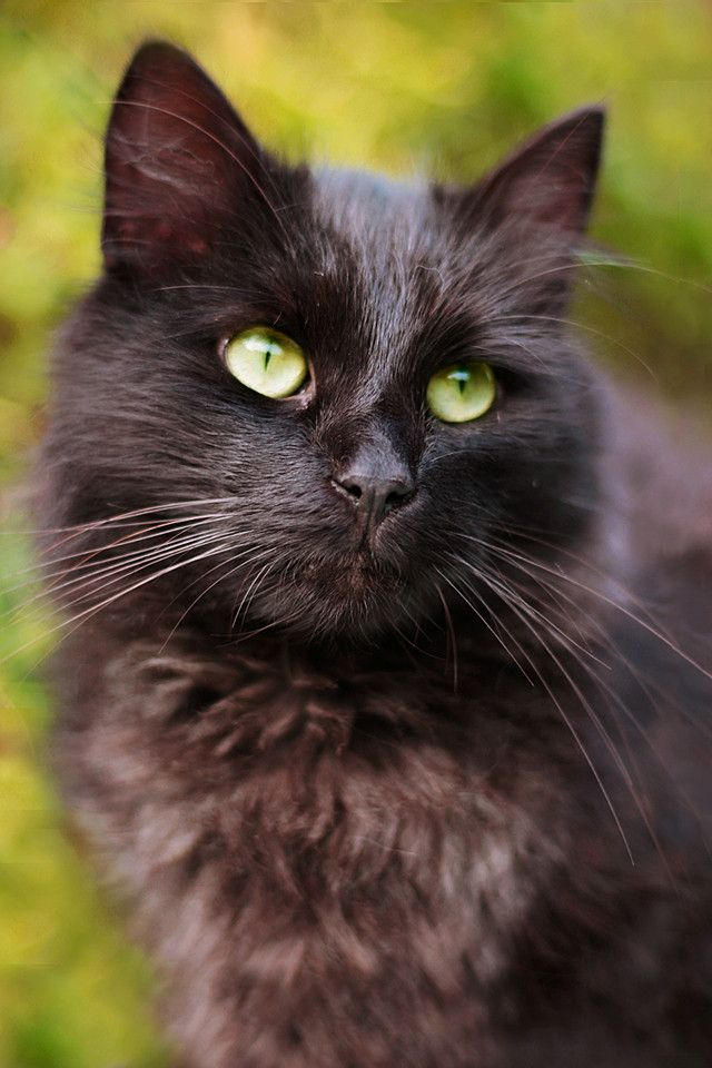 """""""Cats are Nature's beauty."""" --French Proverb"""