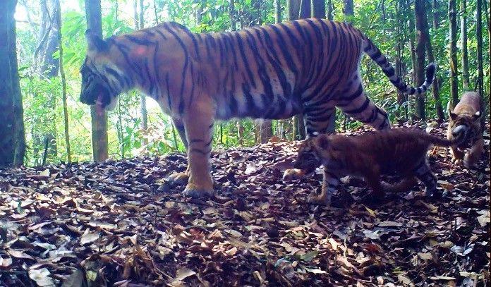Kebun Binatang Bukittinggi Sepakati Tukar Menukar Satwa dengan Kebun Binatang Bali