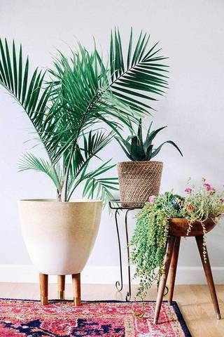 living room updates white vignette with potted plants