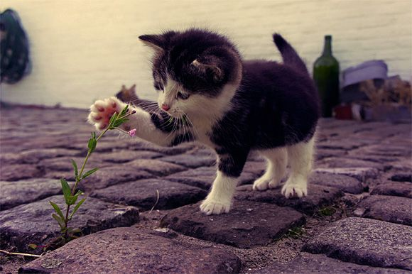 Funny Kitty, Kittens Plays, Cat, Funny Animal Pics, Black And White, Flower Children, Leaves, Baby Kitty, Tuxedos