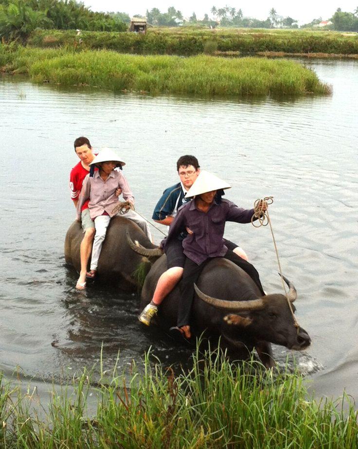 Water buffalo rides . . . priceless! #VietnamSchoolTours #EcoTour