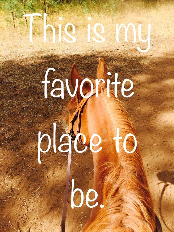 Mine too - no place I'd rather be! On the back of a horse.