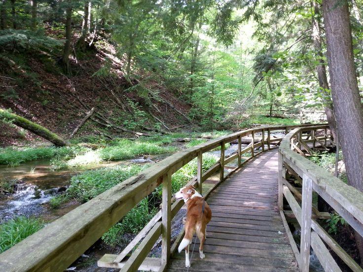 Boardwalk along creek to Weaver's Creek Falls in Owen Sound, Ontario