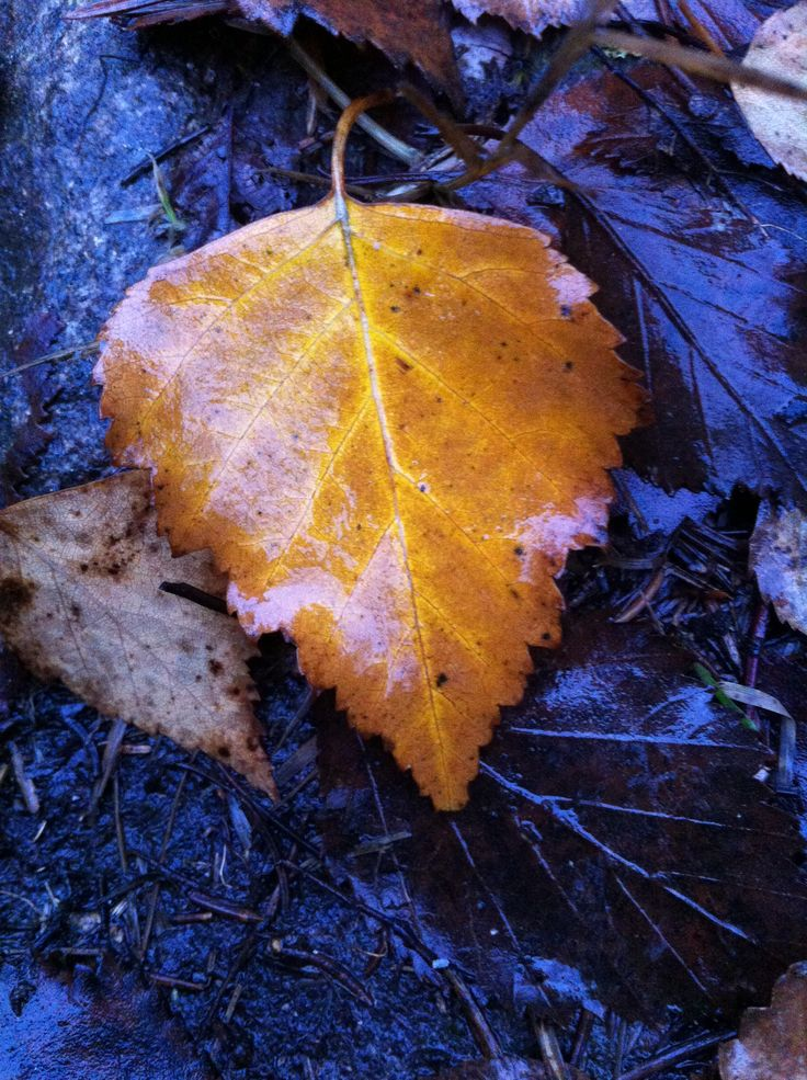 Day 71 - Autumn leaves light up my path