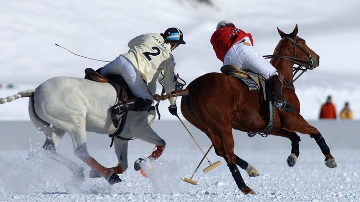 Polo in the snow~
