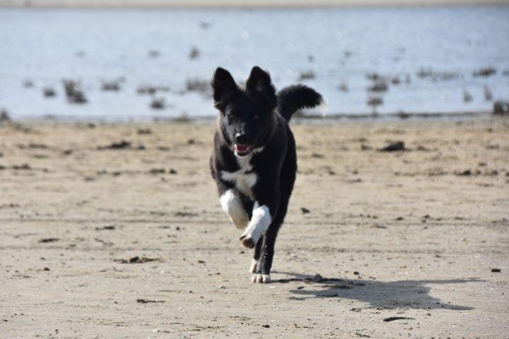 Ein Traum Fur Hunde Nur 5 Minuten Zum Strand In Breskens Schoneveld Zeeland Niederlande Holland Urlaubmithund Hundeurl Ferien Urlaub Mit Hund Urlaub