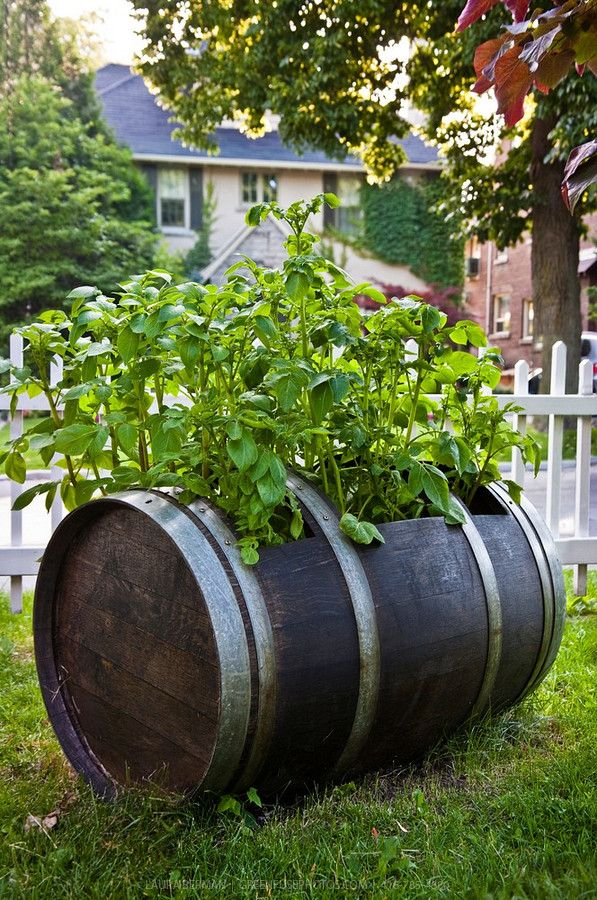 17 Best Images About Made From Wine Barrels How Cool On 400 x 300
