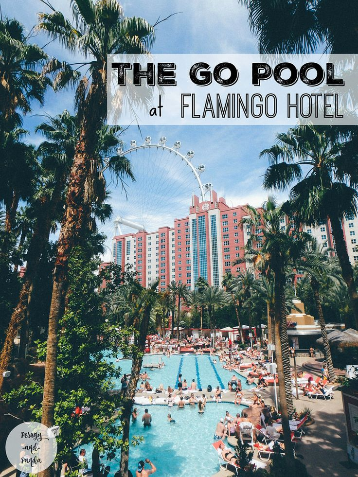 The Go Pool at Flamingo Hotel in Las Vegas - perogyandpanda.com