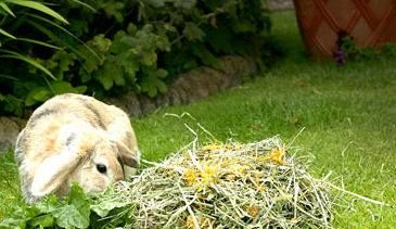 Good quality hay and/or grass should make up the majority of a rabbits' diet and should be available at all times. #TeethTuesday