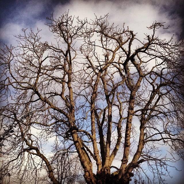 #treeoflaxmi bright 'in cloudy. 9.03am. Saturday. Feb 8.
