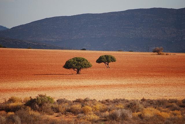 near Outshoorn BelAfrique - Your Personal Travel Planner - www.belafrique.co.za