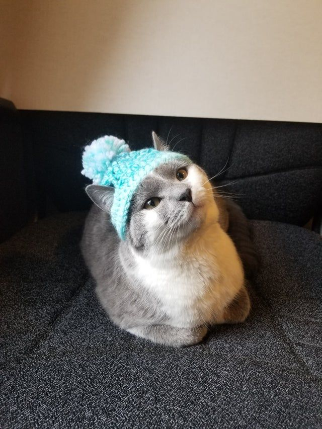 Psbattle This Cat With A Hat On Photoshopbattles Cats Cat Hat Cats And Kittens