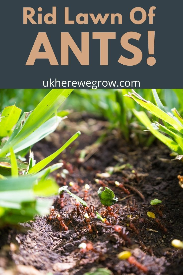 How To Get Rid Of Ants Outside Permanently Uk