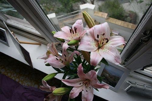 Flowers from Orange Grove Markets