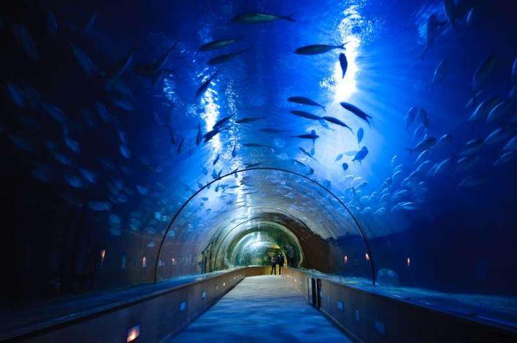 Under the sea at Oceanografico de València