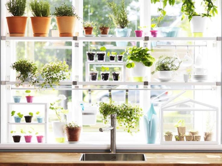 Ikea kitchen herb garden jardin de joie pinterest for Kitchen garden plants